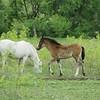 2010, 04-17 b  Horses (108)