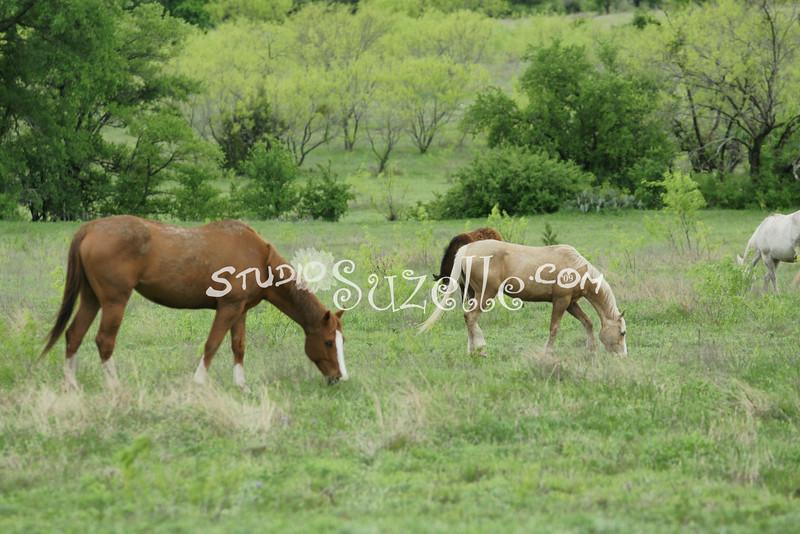 2010, 04-17 b  Horses (100)