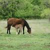 2010, 04-17 b  Horses (116)