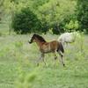 2010, 04-17 b  Horses (109)