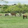 2010, 04-17 b  Horses (112)