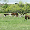 2010, 04-17 b  Horses (113)