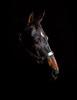 """""""Oops"""", Quarter Horse"""