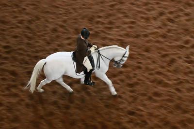 Stallion - Spanish Riding School Practice - Austria
