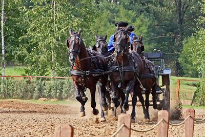 Horse Show on Hungarian Horse Farm