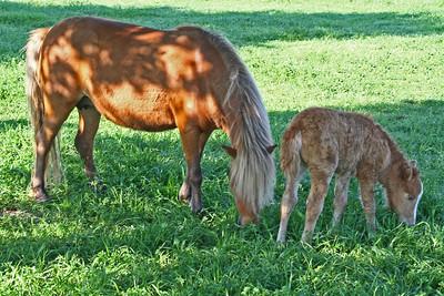 Horse & Colt - Texas
