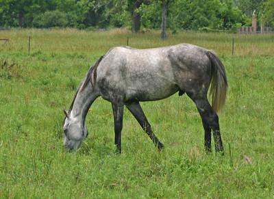 Horse - Texas