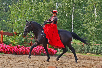 Horse Show on Hungarian Horse Farm
