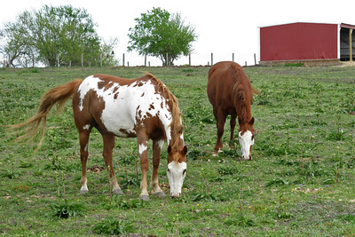 Horses - Texas