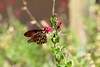 Butterfly_img_9570_06122014