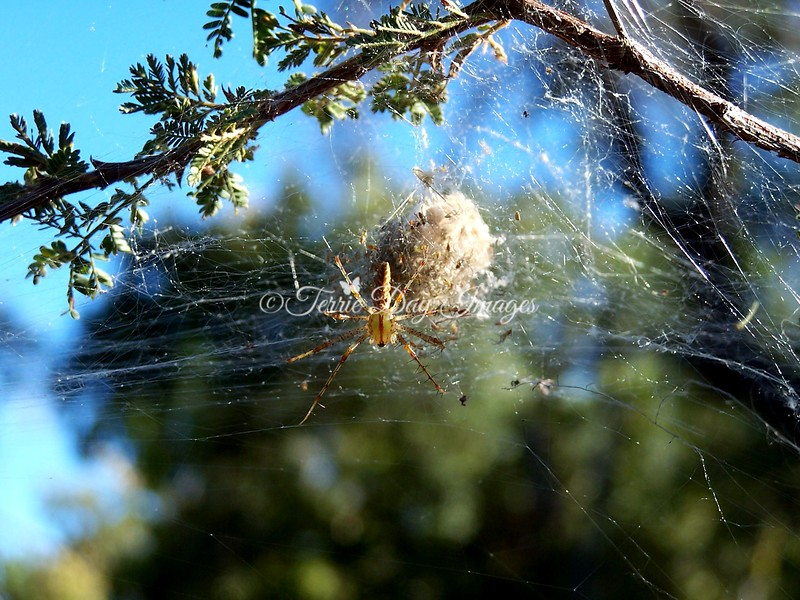 Spider in Ramsey Canyon near Sierra Vista, AZ