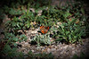 Butterfly_IMG_1684_08162014