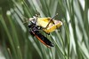Wasp and Butterfly-Yellow