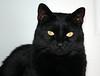 Margo's cat Roscoe