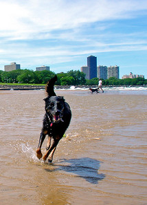 Gwyn having a blast at the Montrose Dog Beach