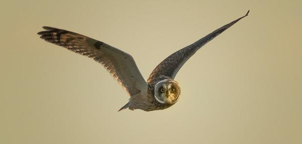 Owls, Hawks, Osprey and Birds of Prey