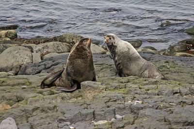 St. Paul's Island, Alaska