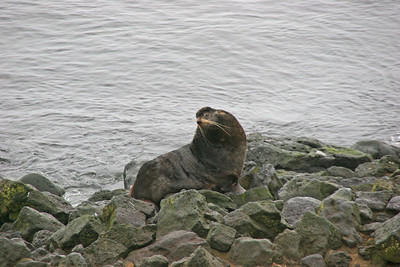 St. Paul's Island. Alaska