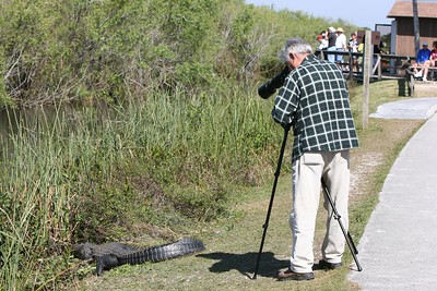 Ready for my close-up. Photographer with long lens taking picture of alligator about 3 ft. away.