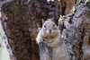 Squirrel_img_4210_04112014