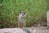 Squirrel_IMG_0816_08262015