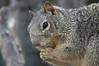 Squirrel_img_4235_04112014