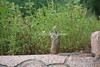 Squirrel_IMG_0812_08262015