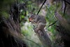 Squirrel_img_4225_04112014