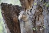 Squirrel_img_4214_04112014