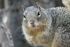 Squirrel_img_4239_04112014