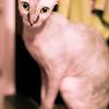 Sphinx_MG_2595-002