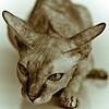 Sphinx_MG_2694-012