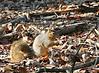 Squirrel @ Glacier Ridge - January, 2008