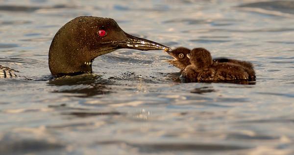 Waterfowl, shorebirds, gulls, egrets, herons...