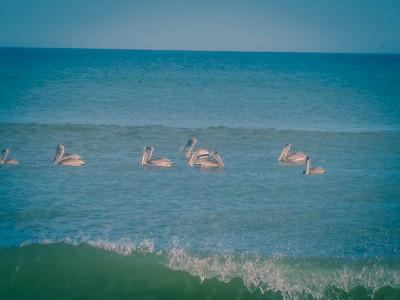 Pelican Bath © Rachel Rubin 2012