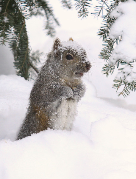 Snowed in on Groundhog's Day