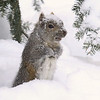 """ Snowed in on Groundhog's Day """