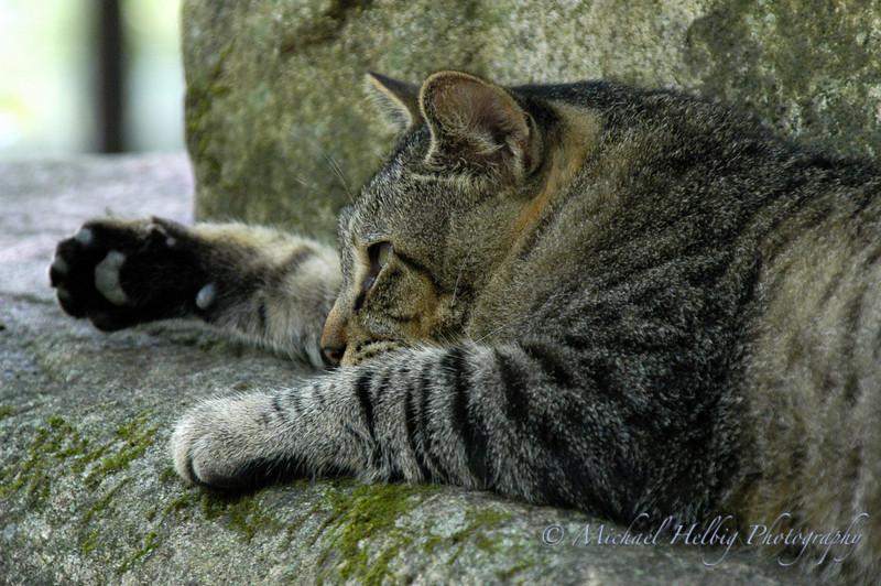 Mitaki Temple Cat