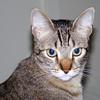 Brian's cat, Bullet