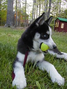 Snowdog finds an Easter Egg
