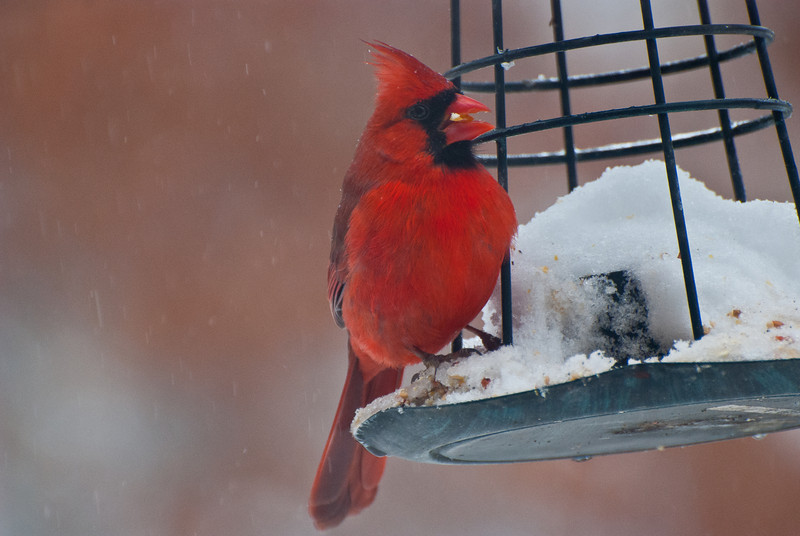 Our favorite snowbirds finding a feast below the snow covered bird feeder.