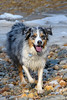 Happy dog!!<br /> Bodhi<br /> February 2009