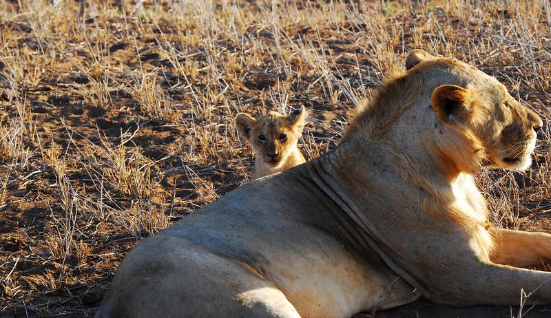 Little Lion and Mum, Kenya 2009