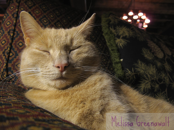 """Fletcher the Common Man cat (a.k.a. The Most Widely Pampered Cat in the World) reminds me of a saying I've seen in many places: """"Dogs Have Masters; Cats Have Staff.""""<br /> <br /> Indeed."""