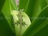 Gecko_0454a