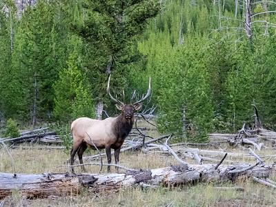 Yellowstone-183