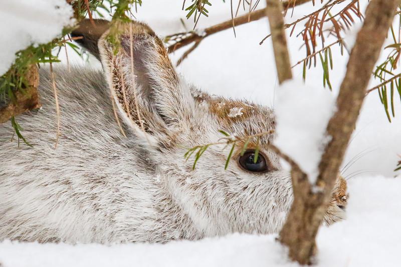 Snow Bunny (3)