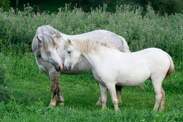 The Horse Whisperers 2