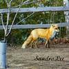 Petoskey photographer, Sandra Lee Photography Studio & Gallery, 318 E Mitchell St, Petoskey Mi 49770, 231-622-2066, Sandra Lee can make you a custom piece of artwork from this photo!