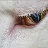 In the Eye of the Feline